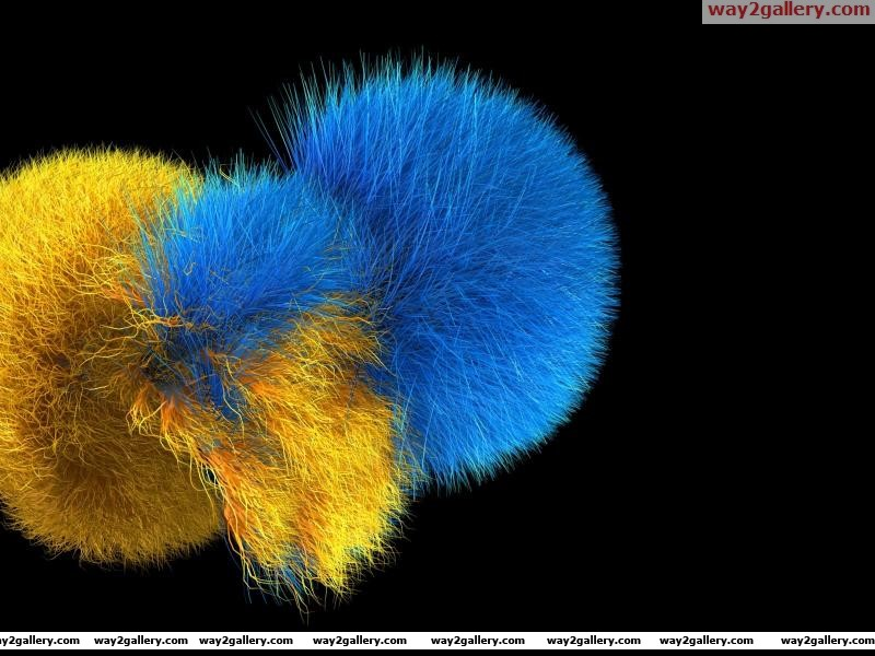 Blue and yellow fur
