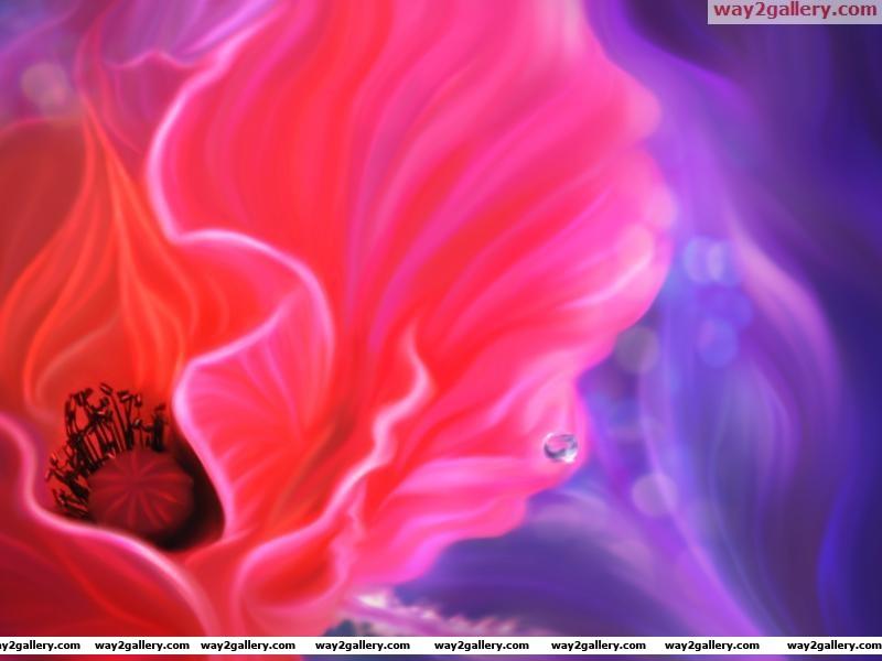 Wallpaper art flower poppy line drop
