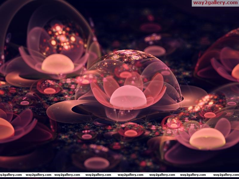Wallpaper flowers flowers bubbles macro abstract