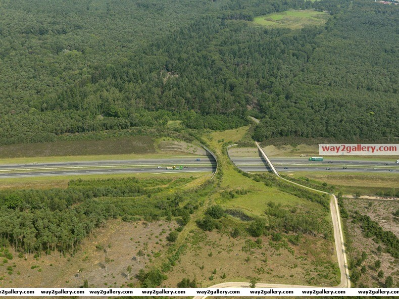Wildlife crossings in the netherlands
