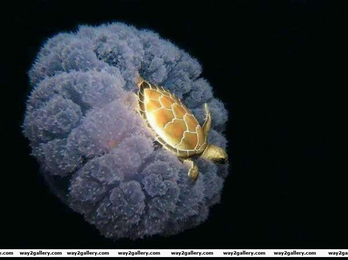 8 a turtle riding a jellyfish