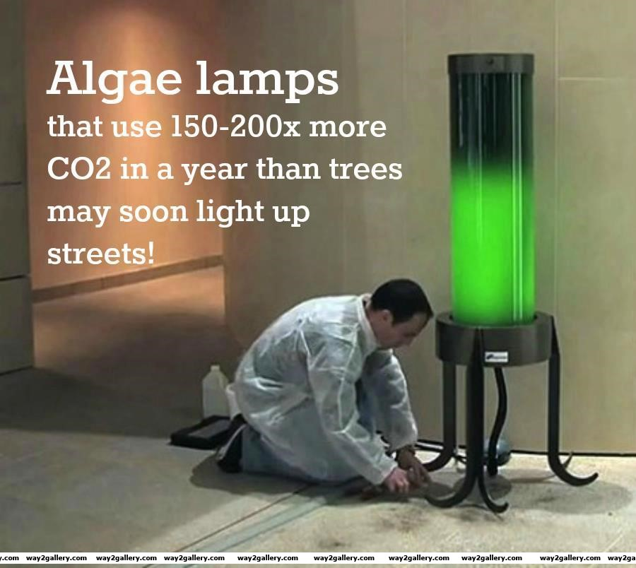 Amazing pics amazing pictures amazing photos algae lamps amazing algae lamps science amazing invention technology trees light light lamps biochemist biochemistry