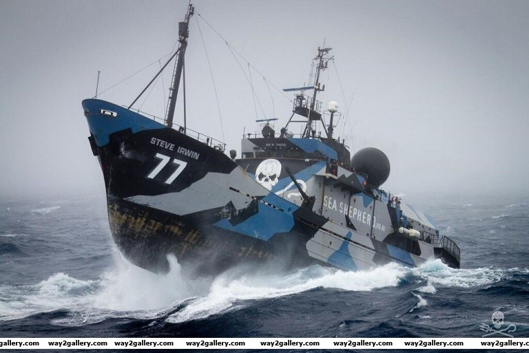 Check out this awesome anti whaling ship the sea shephard